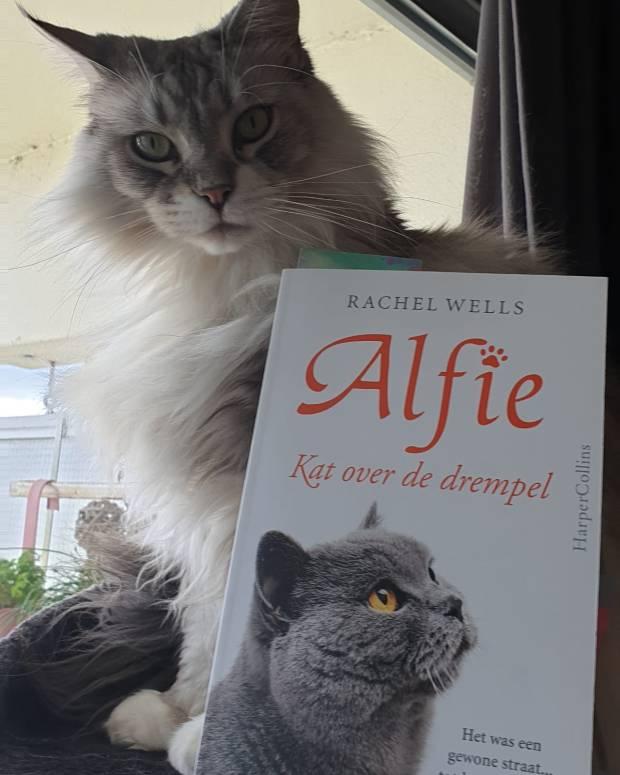 Alfie 3.jpg