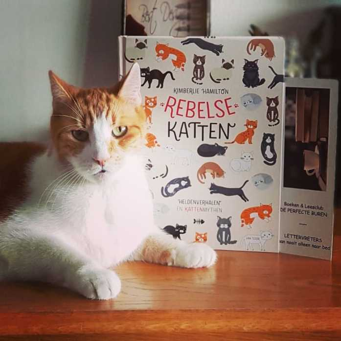 Rebelse Katten.jpg